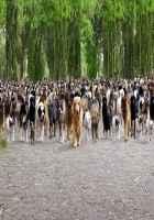 Its Entertainment Dogs Scene Stills