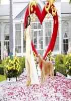 Its Entertainment Tamannaah Bhatia And Dog Love Scene Stills
