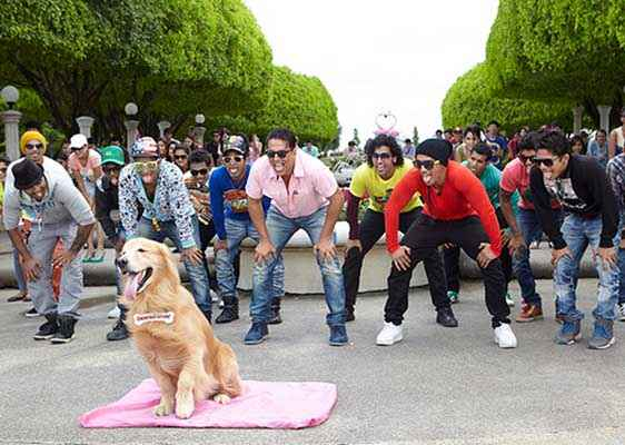 Its Entertainment Akshay Kumar Comedy With Dog Stills