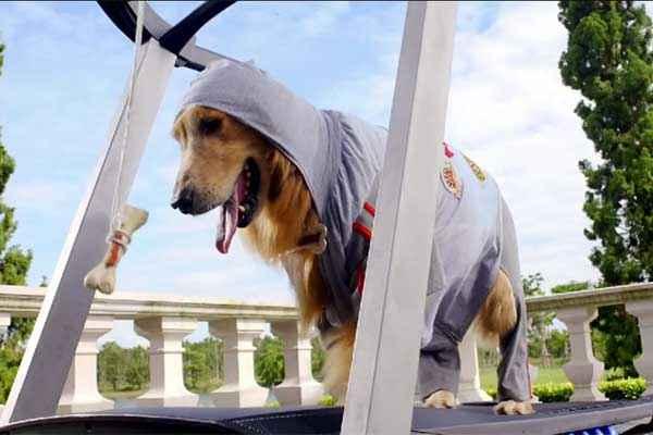 Its Entertainment Dog HD Wallpaper Stills