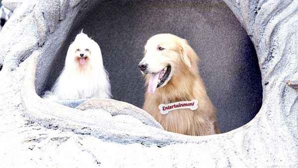 Its Entertainment Dog Pair Stills