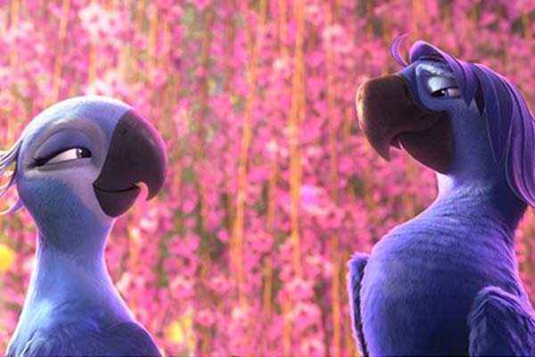 Rio 2 Wallpapers Stills
