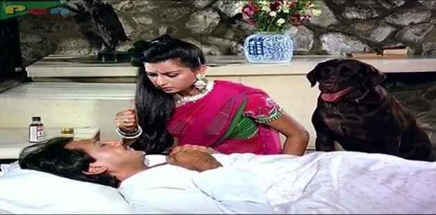 Teri Meherbaniyan Jackie Shroff Poonam Dhillon Brownie As Moti Dog Stills